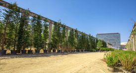 arbori parc openville (12)