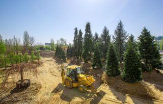 arbori parc openville (9)