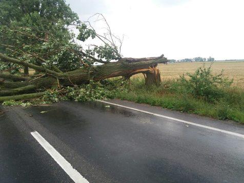 copac prabusit Arad 2