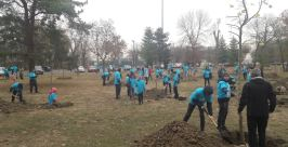 Plantare copaci1
