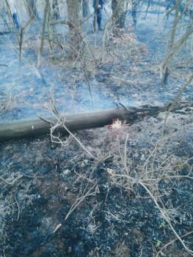 incendiu Semenic (2)