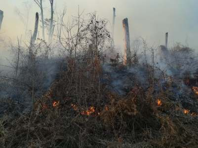 incendiu padure poeni (3)