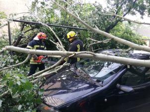 copaci rupti furtuna 19.05.19 (1)