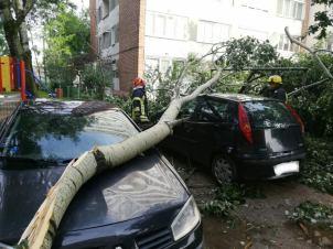 copaci rupti furtuna 19.05.19 (4)