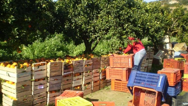 Francofonte, i  piccoli coltivatori potrebbero scomparire. protesta per evitare il rischio della morte di 200 ettari di agrumeti.