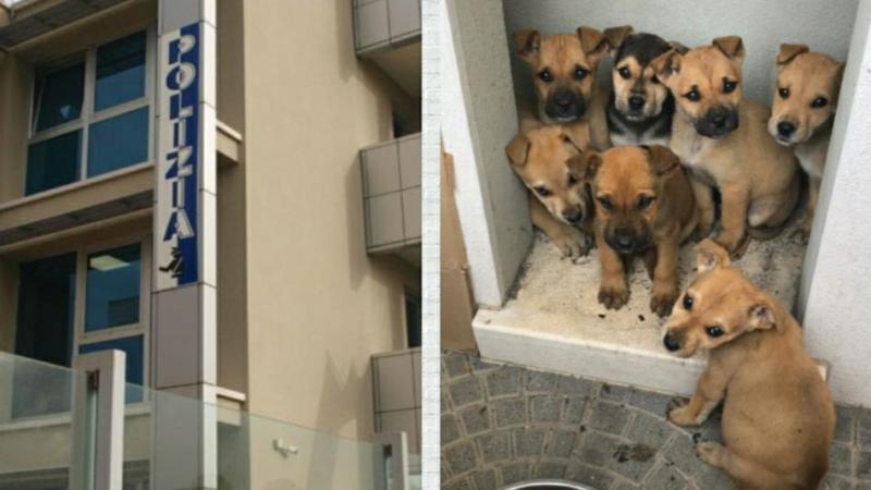 Lentini. La Polizia di Stato salva 7 cuccioli di cane abbandonati