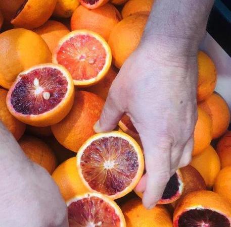 Palermo, Alimentare: Oranfrizer, primo test arance rosse Australia