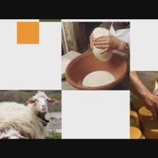 sheepdesign