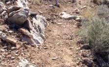 Shaky cam. +_+ #trail #run #huntermtn