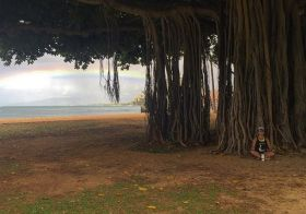 Seeking nirvana… #banyantree #waikikibeach [instagram]