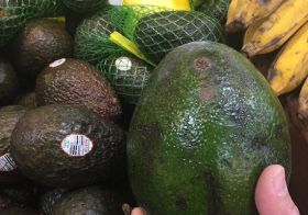 This is not just an avocado. This is an AVOcado! #whoa #floridaavocado #isthisgmo #asianmarketfinds [instagram]