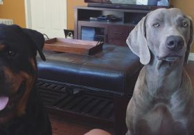 """When I ask, """"who wants a treat?"""" Someone doesn't always believe it's gonna happen.  Miss these boys! [instagram]"""
