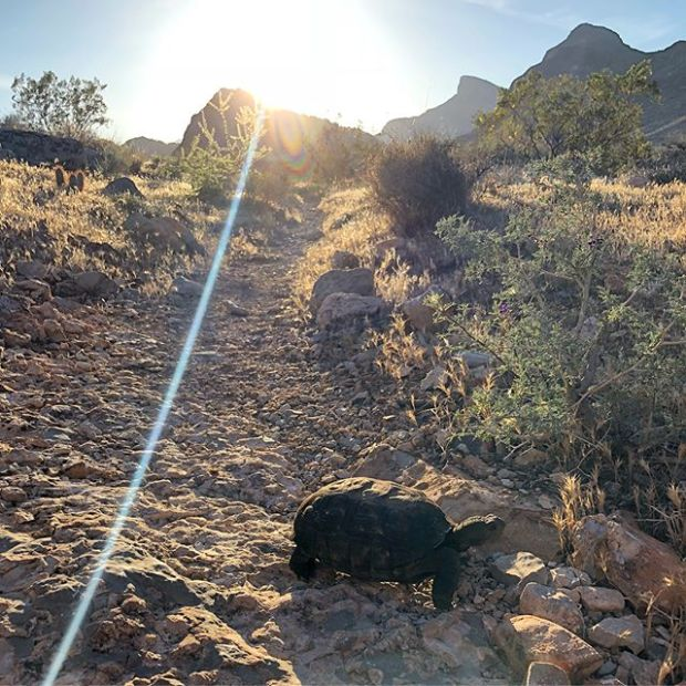We had a special guest join us on our Monday night trail run...  It was my first ever tortoise sighting, too!  Then we went up Peak 3844 and enjoyed some lovely desert singletrack in only 97°F