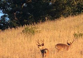 Deers! Selfie! Nature warning signs! Lol keeping myself entertained before race start. #quicksilver50k [instagram]