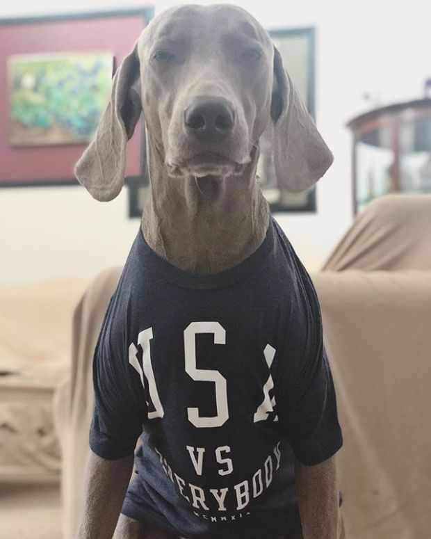 Kingston is ready for round 2 of @fifawomensworldcup Guess who he's cheering for? @uswnt of course! #usavseverybody #weimaraner