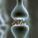 Органы можно будет распечатать на 3D био принтере