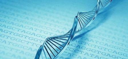 Генетические анализы