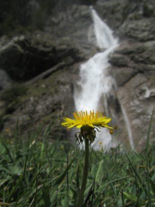 Wasserfall Vorauen am Klöntalersee mit Schwiiblueme