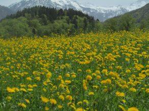 Blumenwiesen in Riedern