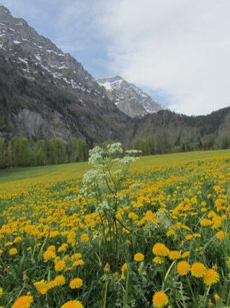 Blumenwiese beim Saggberg