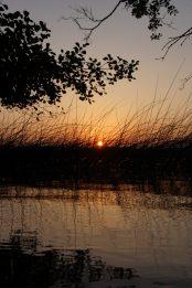 Sonne durch Schilf am Greifensee