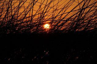 Sonnenaufgang am Ufer des Greifensees