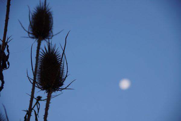 De Mond