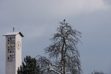 die Krähe und der Turm