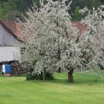 Früehlig in Killwange