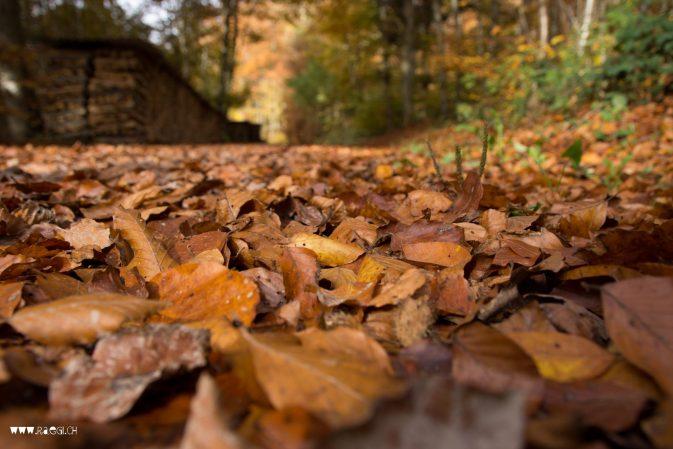 Blätterrascheln im Herbstwald