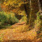 Dies ist ein Herbsttag….