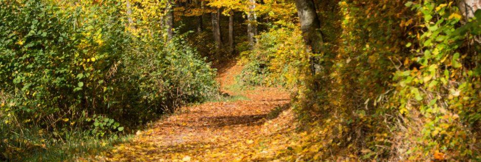 Waldweg Egelsee