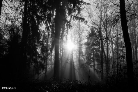 Die tiefe Novembersonne drückt den Nebel in den Wald
