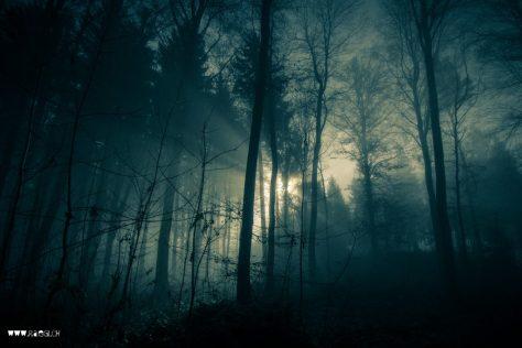 Im schöne grüene Wald