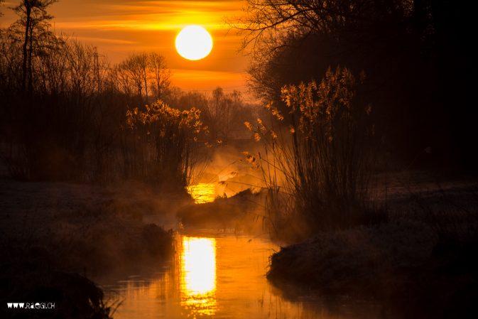 """Siegerbild """"Gold"""" Zoom Fotoblog"""