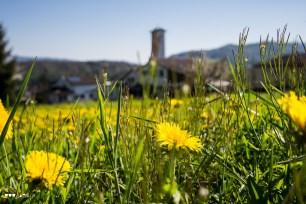 Frühlingswiese in Killwangen