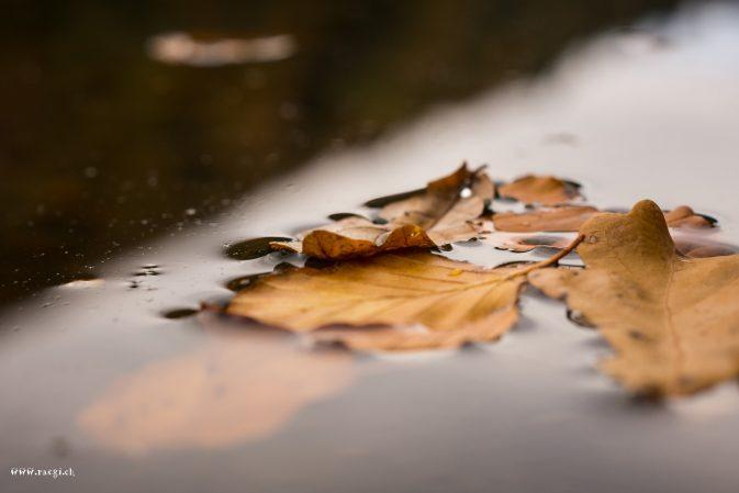 Blätter auf dem Egelsee