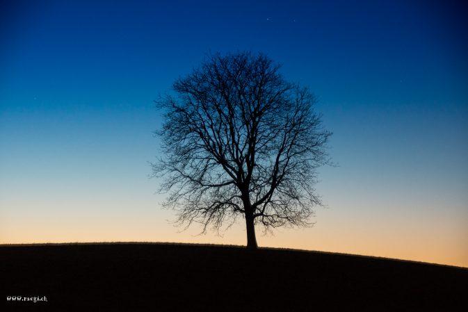 Einsamber Baum