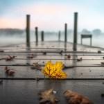 Morgendämmerung am Herbstlichen Katzensee