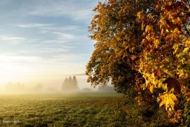 Goldenener Herbst