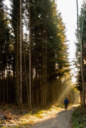 Im schönen Wald