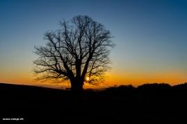 Sonnenaufgang bei der Linde von Linn