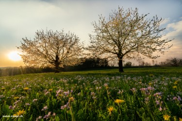 Frühlingsdüfte
