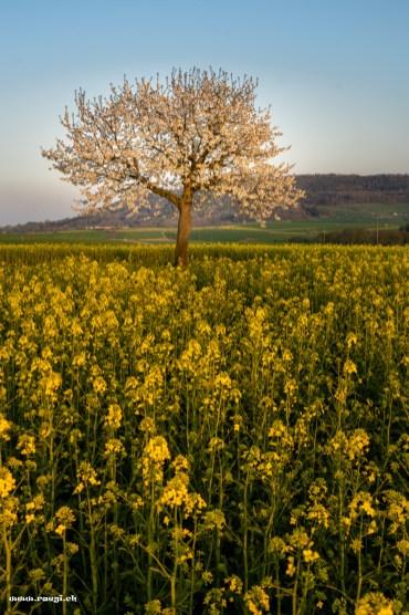Im Gelben Feld
