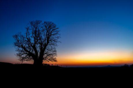 Morgenrot bei der Linde von Linn