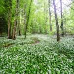 Judihui de Wald isch grüen