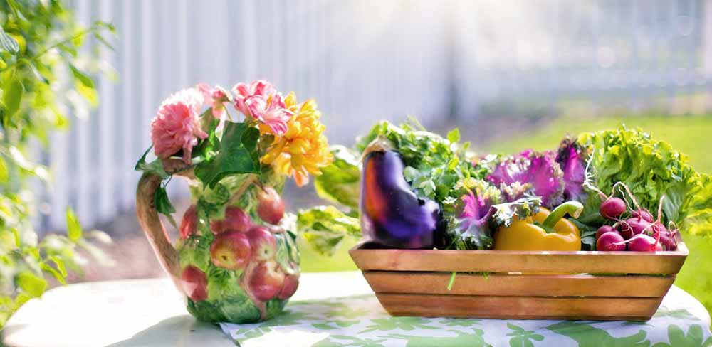 Lattuga: la protagonista di tutte le nostre insalate