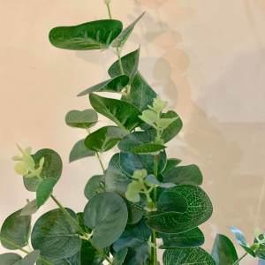 Eucalyptus Spray Green