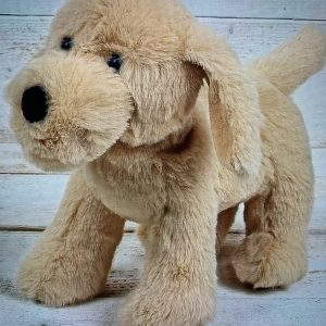 Golden Puppy – Suitable From Birth