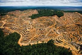 strip mines in the forest